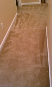 Standard Carpet- After. Residential cleaning post water damage